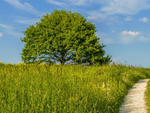 Fränkischer Dünenweg Etappe  4