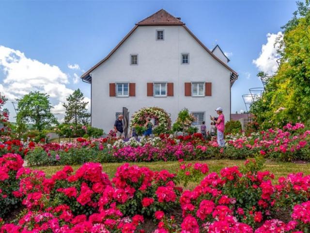 Rosendorf Nöggenschwiel