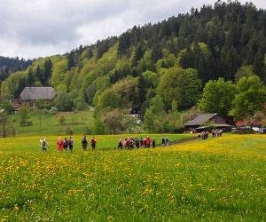 Auf-dem-Lauterbacher-Wandersteig