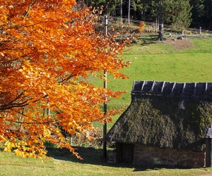 Herbststimmung-an-der-Winterbauernhofmuehle