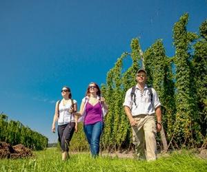 Wandern-in-den-Hopfengärten-bei-Spalt-(Archiv-Tourismusverband-Fränkisches-Seenland-und-seiner-Partner)