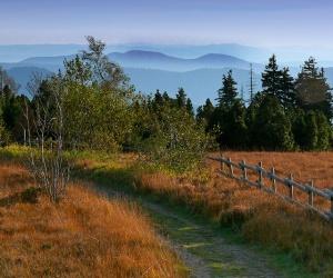 Weg-im-Herbst-Foto-Michael-Sauer-Schwarzwald-Tourismus