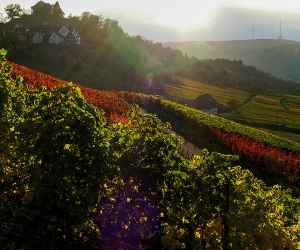 Wein_Rotenberg_Abendherbststimmung_c-Stuttgart-Marketing-GmbH-