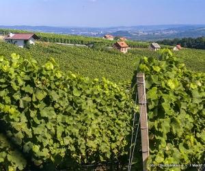 Weinlage-Harstell