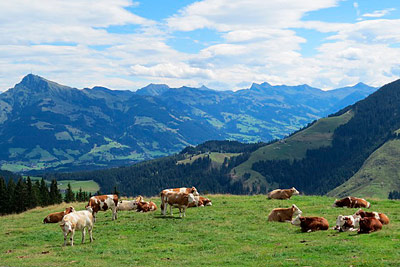 Über die grünen Gipfel der Kitzbüheler Alpen