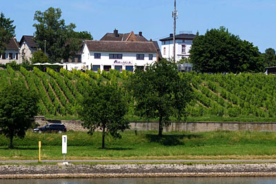 Rheinblick - Gutsausschank & Gästehaus