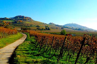 Auf den Spuren des Bergsträßer Weins